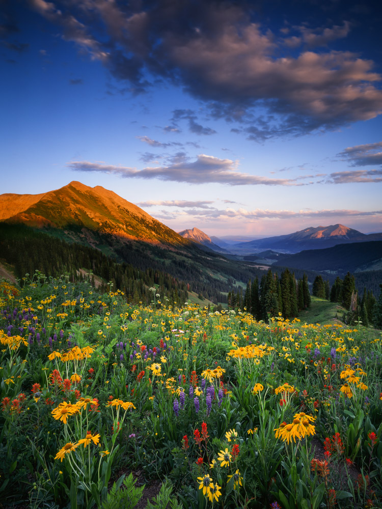 Washington Gulch Summer Light