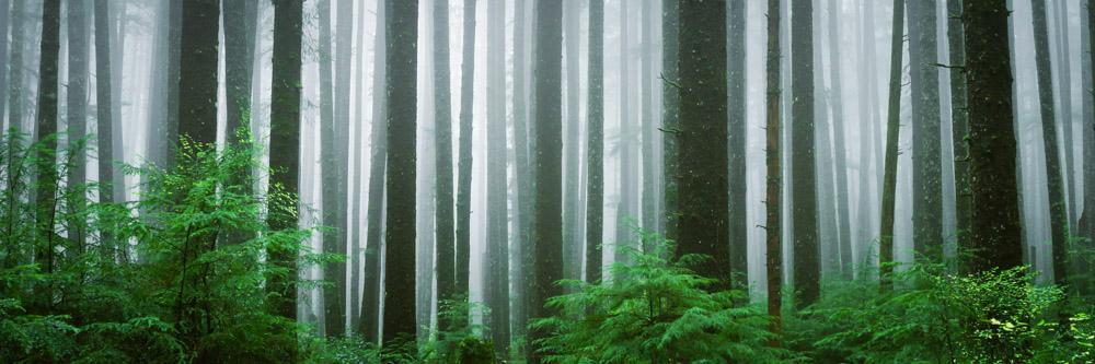 Spirit Trees